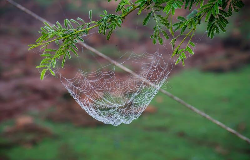 Rete del ragno con le gocce dell'acqua fotografie stock libere da diritti