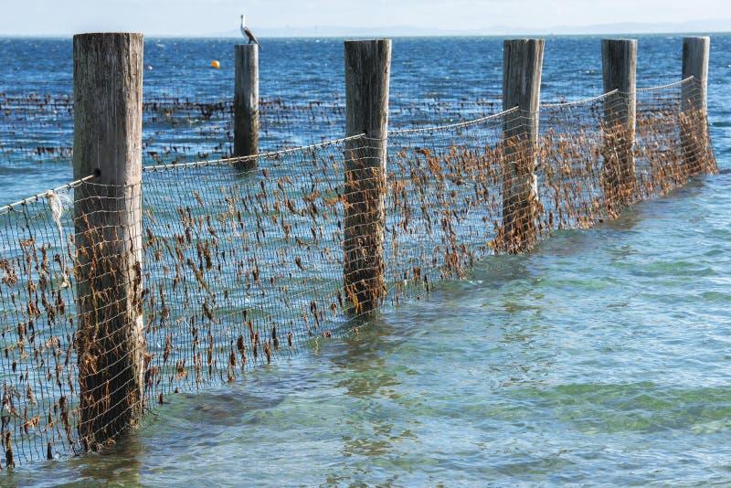 Download Rete Dello Squalo Nell'isola Del Nord Di Stradbroke, Queensland Immagine Stock - Immagine di squalo, giorno: 55358445