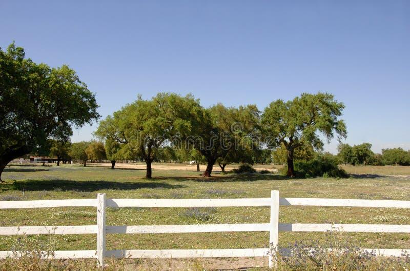 Rete fissa di legno bianca nel campo dell'azienda agricola immagine stock
