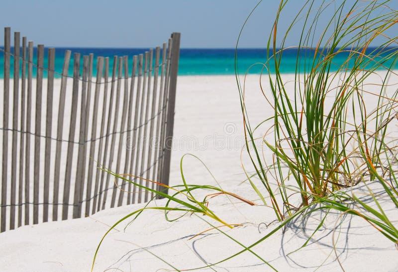 Rete fissa ed erbe della spiaggia immagine stock libera da diritti