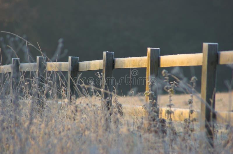 Download Rete fissa gelida fotografia stock. Immagine di bello, mattina - 350122