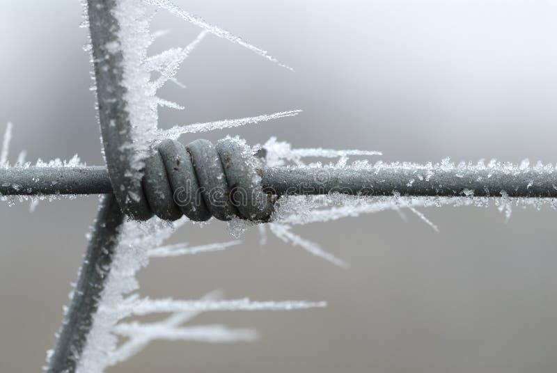 Rete fissa ghiacciata fotografie stock libere da diritti