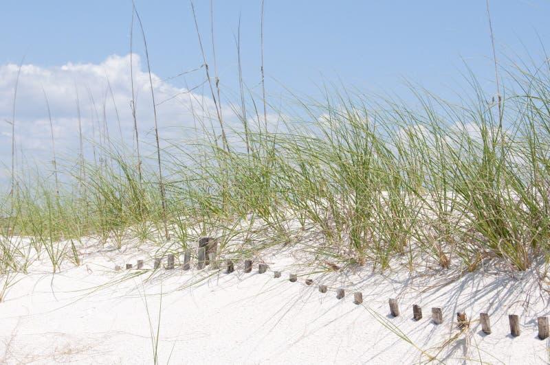 Rete fissa sepolta della duna di sabbia fotografie stock
