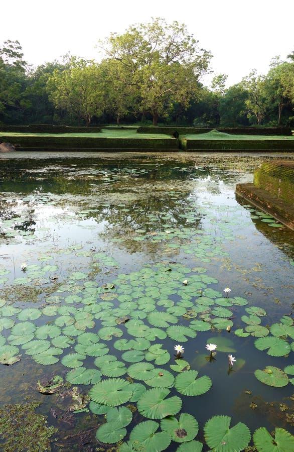 Retención antigua Lotus Pond Sigiriya foto de archivo libre de regalías
