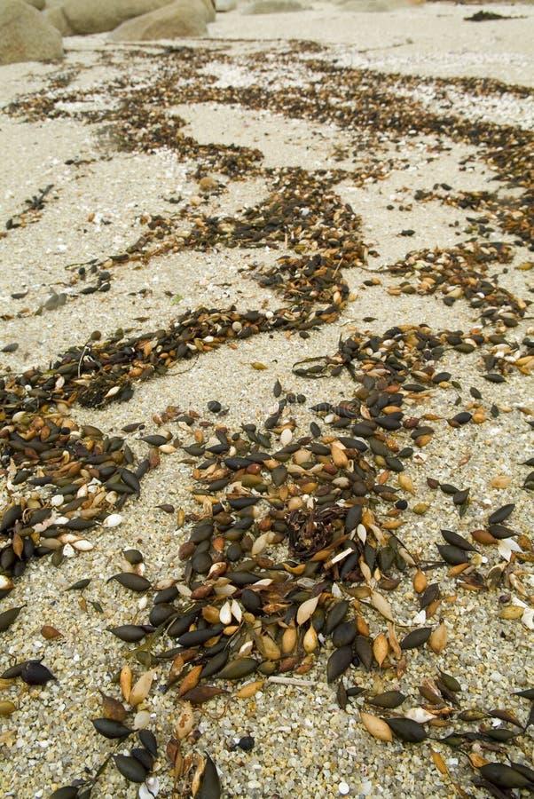 Reticoli dei residui della spiaggia fotografia stock libera da diritti