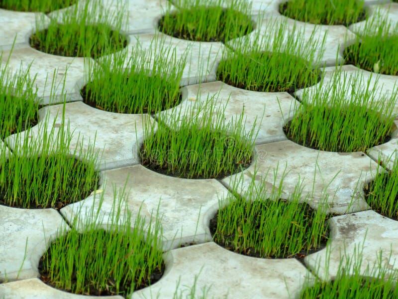 Reticolo concreto 01 dell'erba immagini stock