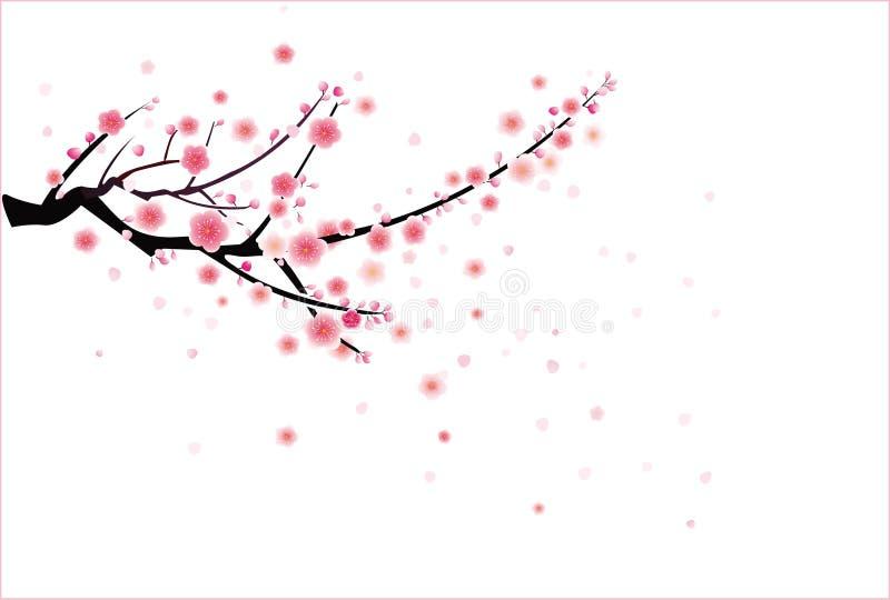 Reticolo del fiore della prugna o della ciliegia royalty illustrazione gratis