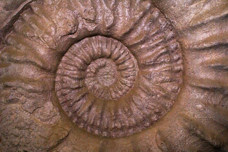 Modello Del Fossile Di Shell Fotografie Stock