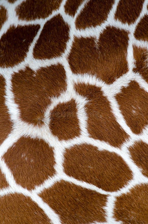 Download Reticolo della giraffa fotografia stock. Immagine di particolare - 24852204
