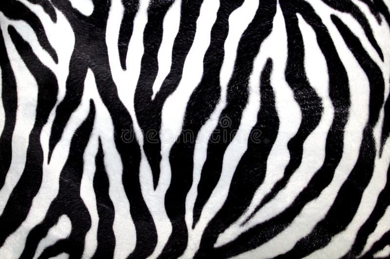 Reticolo della zebra fotografie stock libere da diritti