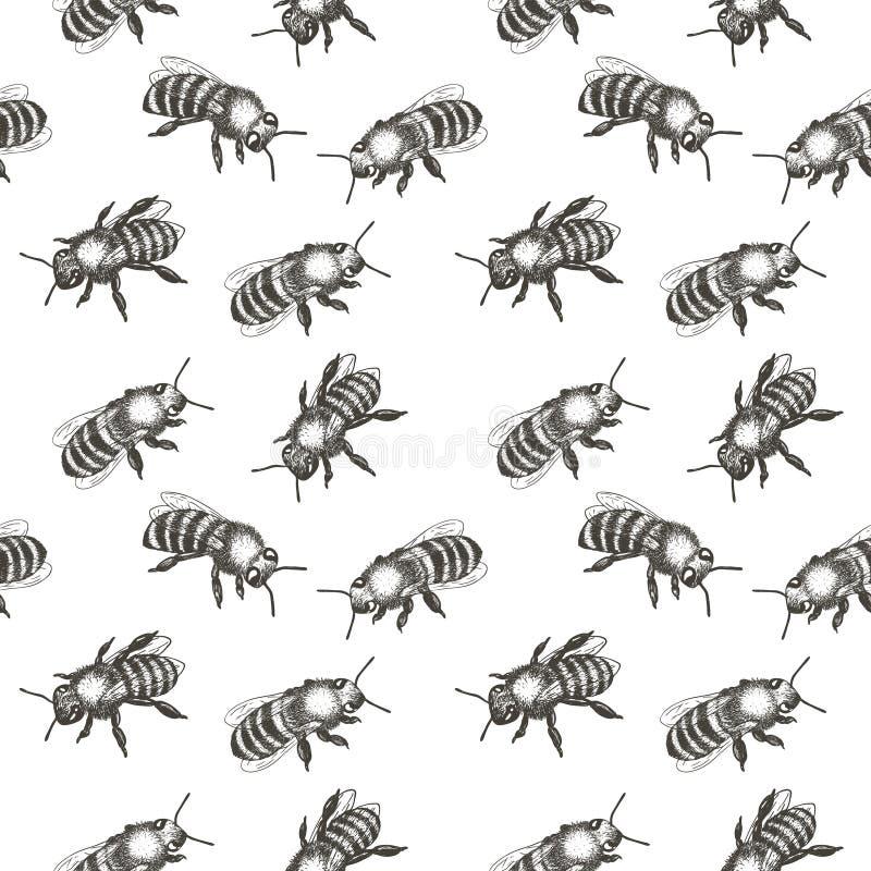 Reticolo senza giunte con gli api Illustrazione disegnata a mano di vettore illustrazione vettoriale