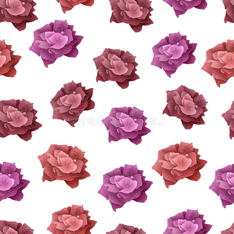 Reticolo senza giunte della Rosa La fioritura rossa e rosa è aumentato illustrazione vettoriale
