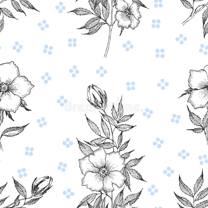 Reticolo senza giunte Fiore botanico d'annata dell'illustrazione Valentino del cuore su fondo bianco Concetto di Botanica Disegno illustrazione di stock