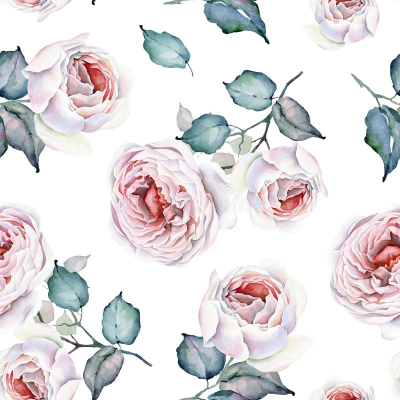 Reticolo senza giunte Fiori dell'acquerello punto di vista superiore delle rose del mazzo Rose bianche e dentellare illustrazione vettoriale