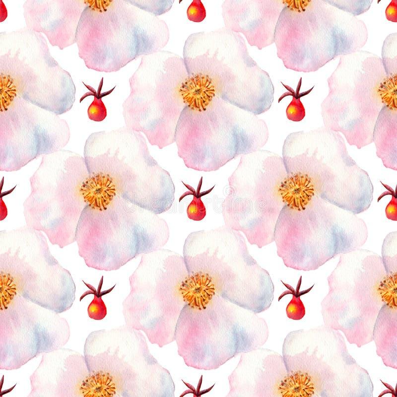 Reticolo senza giunte Fiori e frutti dell'acquerello dei cinorrodi Illustrazioni del fiore Mazzi della Boemia dei fiori, corone,  royalty illustrazione gratis