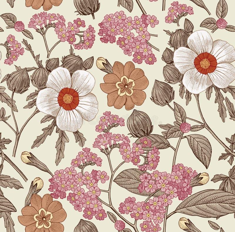 Reticolo senza giunte Fiori isolati realistici Vettore d'annata dell'incisione del disegno del hibisc di primavera dell'ibisco de royalty illustrazione gratis