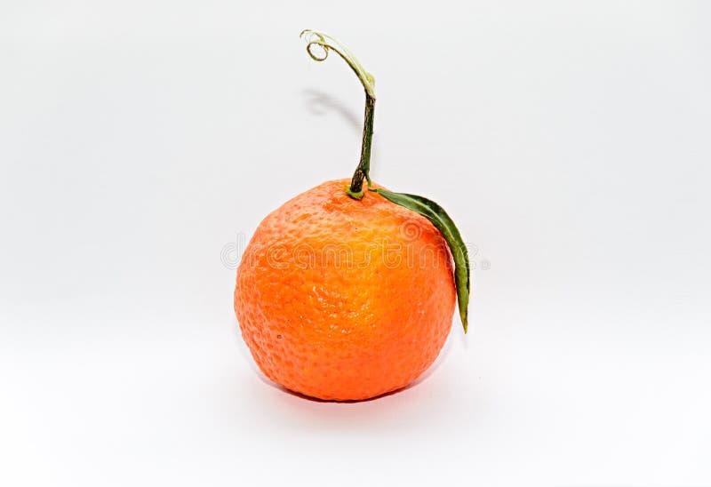 Reticulata с зелеными листьями, конец цитруса апельсина мандарина вверх стоковая фотография