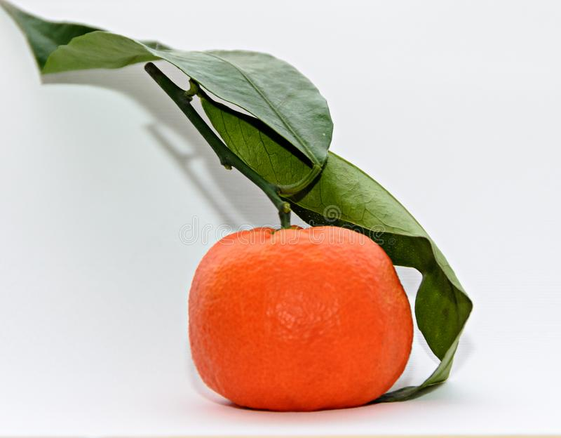 Reticulata con las hojas verdes, cierre de la fruta cítrica de la mandarina para arriba imágenes de archivo libres de regalías