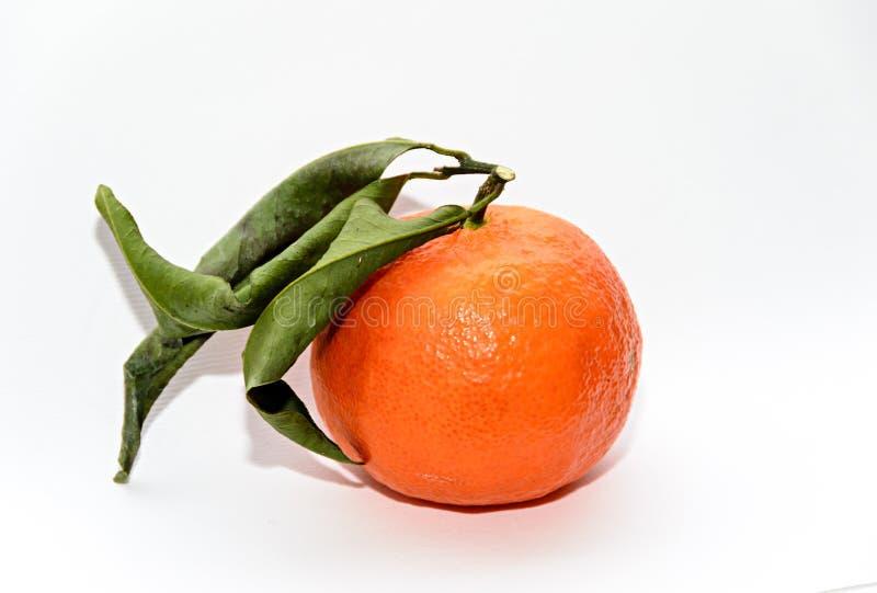 Reticulata con las hojas verdes, cierre de la fruta cítrica de la mandarina para arriba imagen de archivo