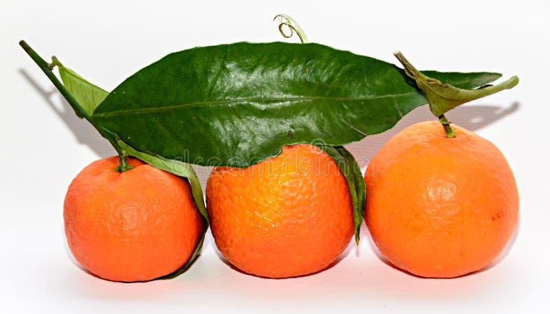 Reticulata con las hojas verdes, cierre de la fruta cítrica de la mandarina para arriba foto de archivo