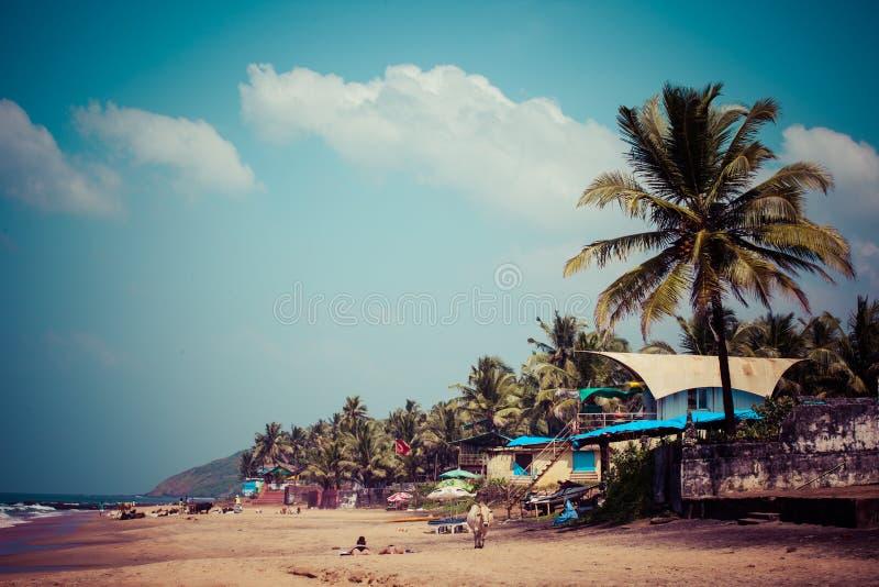 Retirando Anjuna encalhe o panorama na maré baixa com a areia molhada branca e as palmas de coco verdes, Goa, Índia foto de stock royalty free