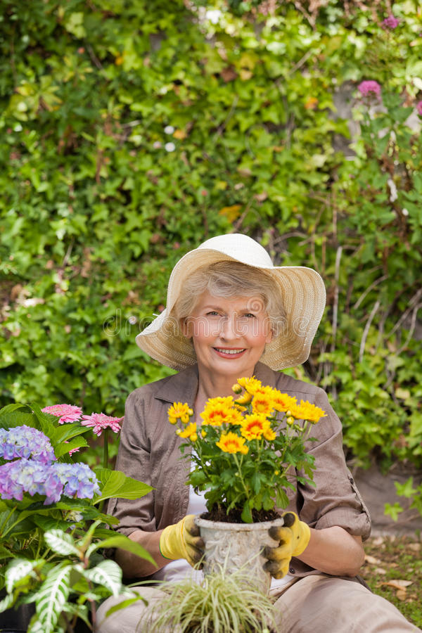 Download Retired Woman Working In The Garden Stock Photo - Image of ethnicity, retired: 18455346
