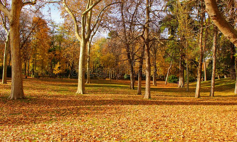 Retiro Park in Madrid royalty free stock photos