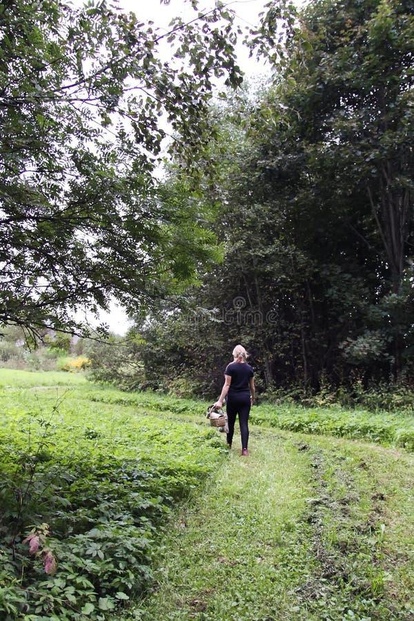 Retornos da menina do adolescente da floresta com os cogumelos na cesta foto de stock royalty free