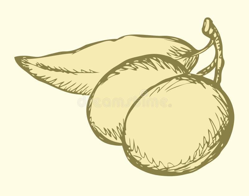 Retrait de vecteur Brindille avec des olives et des feuilles illustration stock