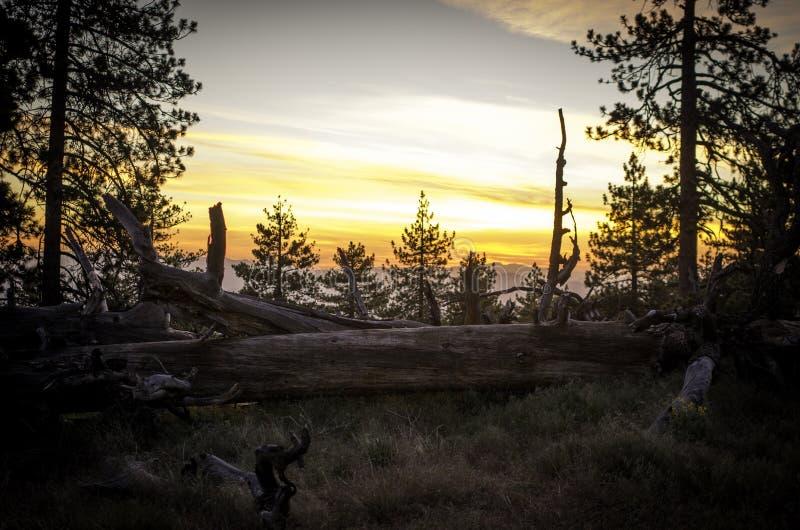 Retraite de montagne de pin photos libres de droits
