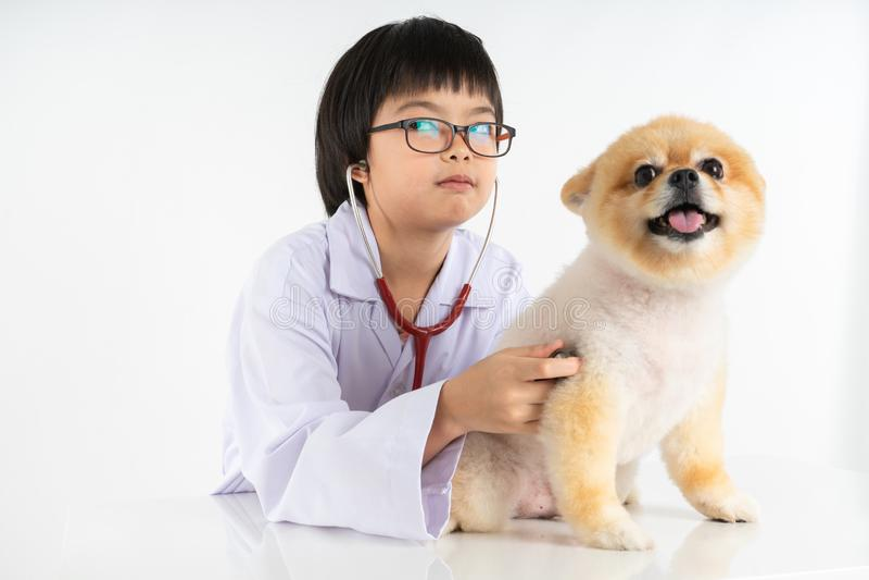Retrato aislado del veterinario de sexo femenino joven que comprueba encima del perro de Pomeranian en cl?nica veterinaria Estudi fotos de archivo
