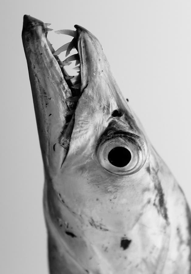 Retrato blanco y negro de los pescados imagenes de archivo