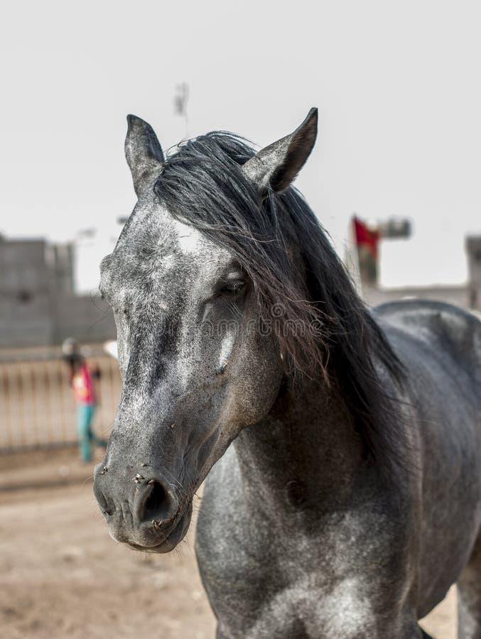 Retrato bonito de um cavalo de exploração agrícola imagens de stock royalty free