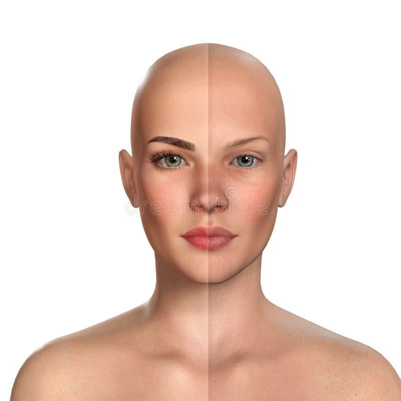 retrato comparativo 3d de mujeres con y sin maquillaje libre illustration