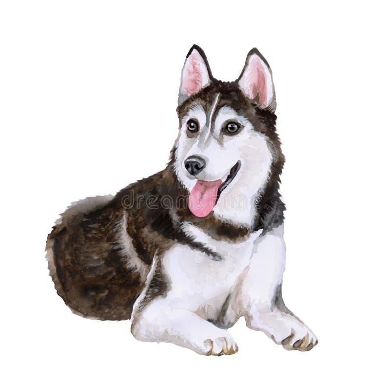 Retrato da aquarela da raça do cão do cão de puxar trenós Siberian no fundo branco Animal de estimação home doce tirado mão ilustração stock