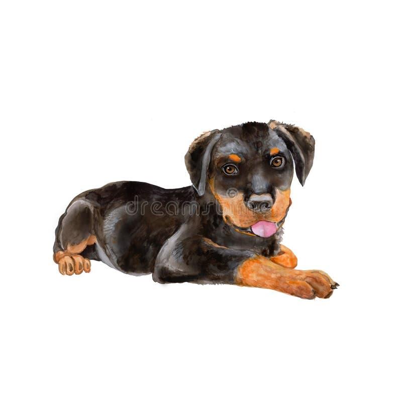 Retrato da aquarela do alemão preto Rottweiler Metzgerhund, Rott, cão da raça de Rottie no fundo branco foto de stock royalty free