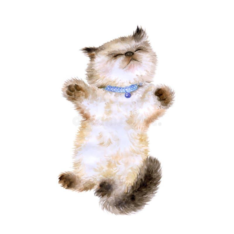Retrato da aquarela do gatinho longhair Himalaia de Colourpoint imagens de stock