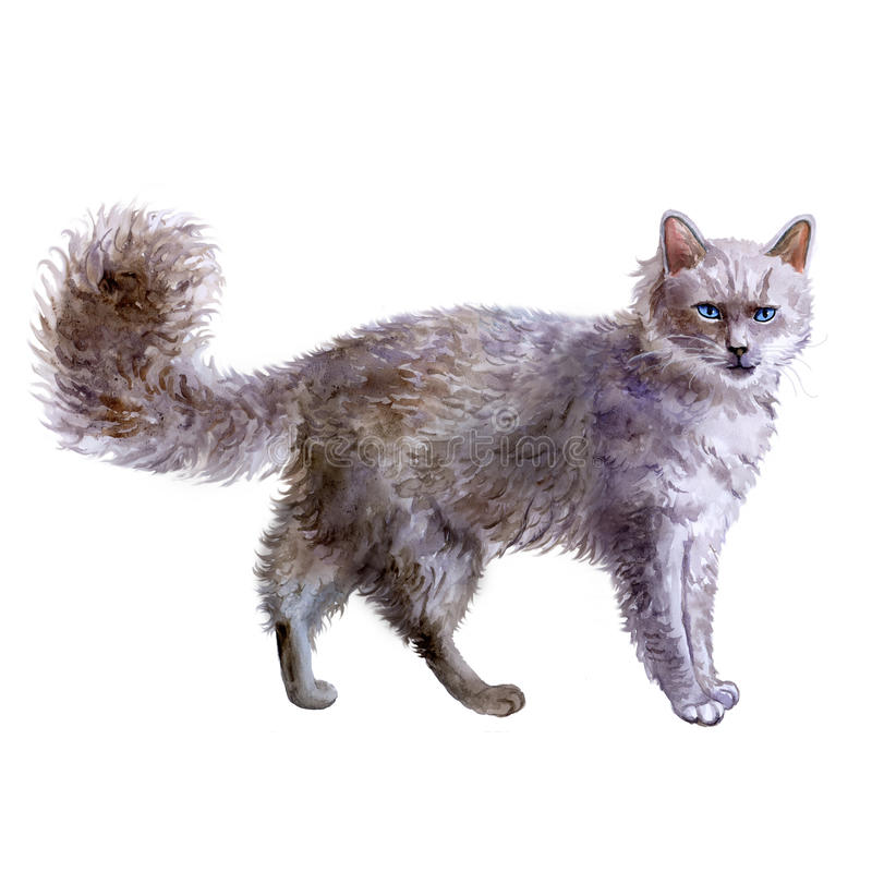 Retrato da aquarela do gato do cabelo encaracolado de LaPerm no fundo branco fotografia de stock
