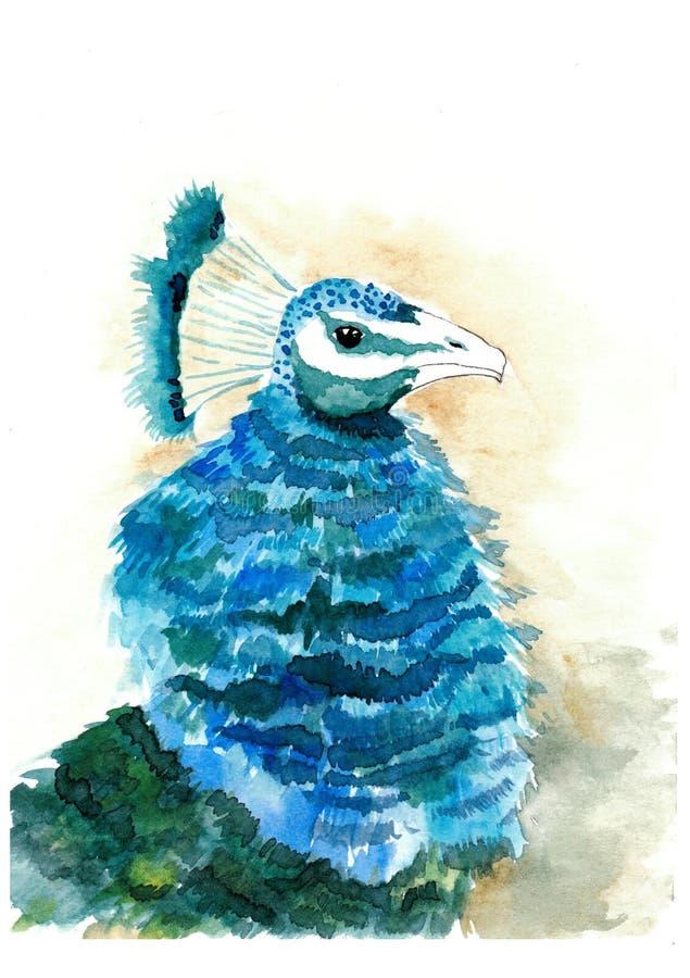 Retrato da aquarela do pavão azul ilustração do vetor