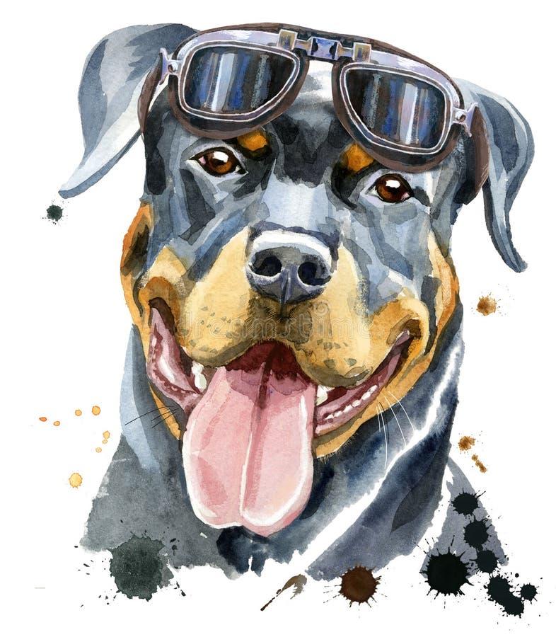 Retrato da aquarela do rottweiler ilustração royalty free