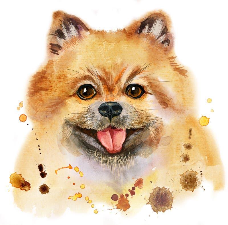 Retrato da aquarela do spitz pomeranian do cão ilustração do vetor