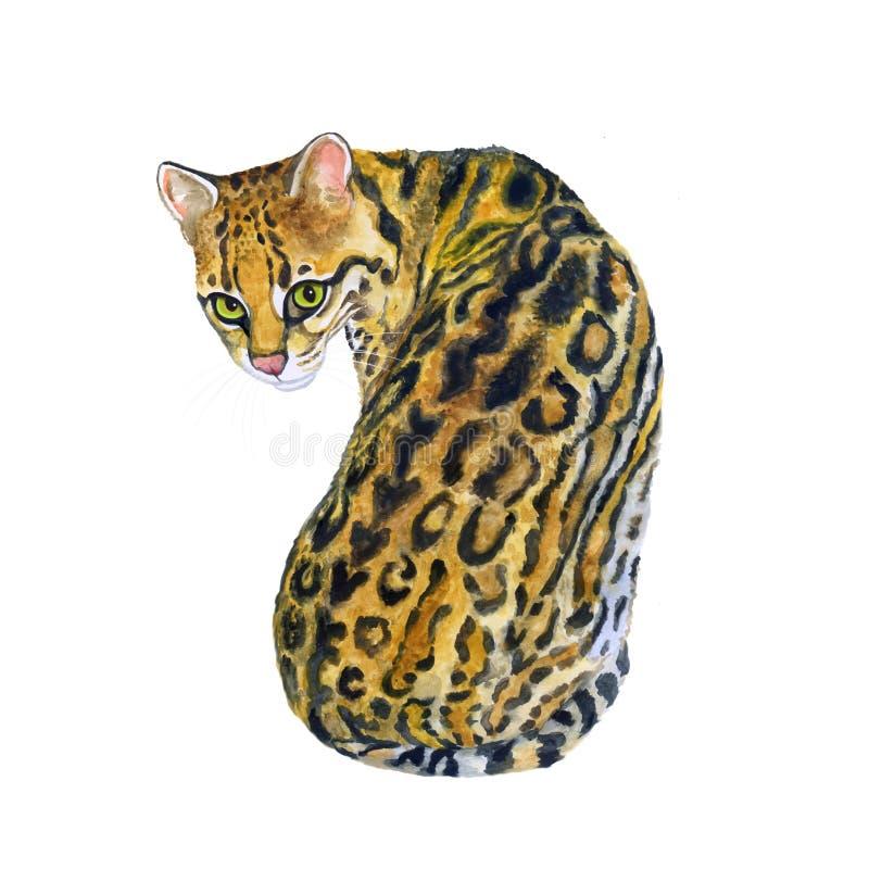 Retrato da aquarela do wiedii margay de Leopardus com pontos, listras no fundo branco Animal de estimação home doce tirado mão Br foto de stock royalty free