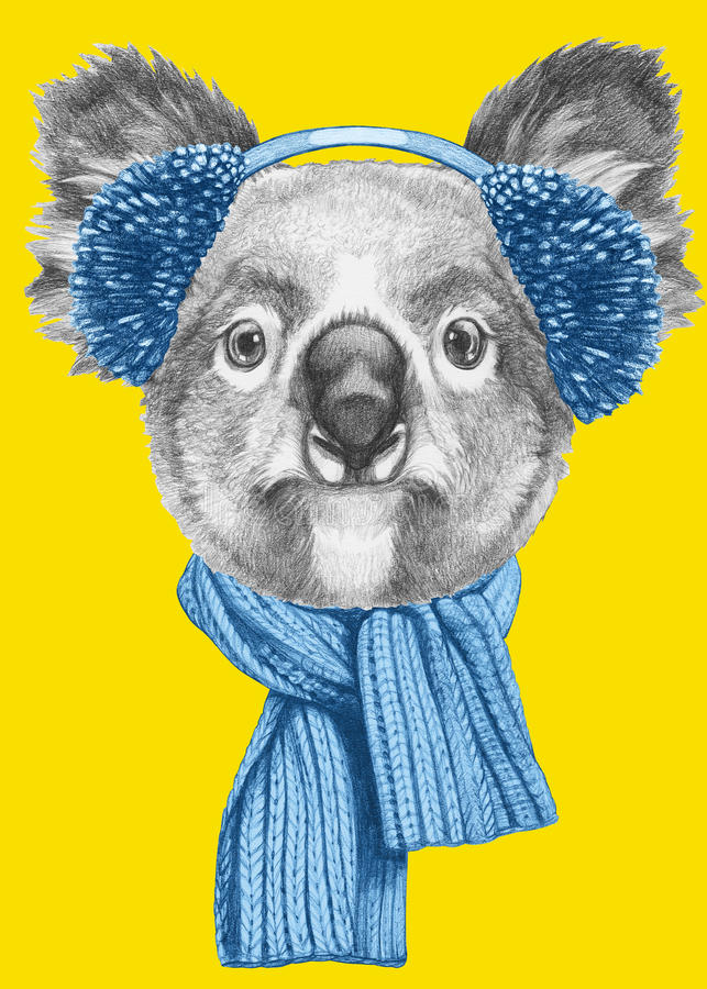 Retrato da coala com lenço e capas protetoras para as orelhas ilustração do vetor