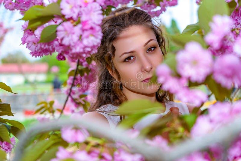 Retrato da jovem mulher bonita com cabelo encaracolado na flor de flores cor-de-rosa de sakura imagem de stock royalty free