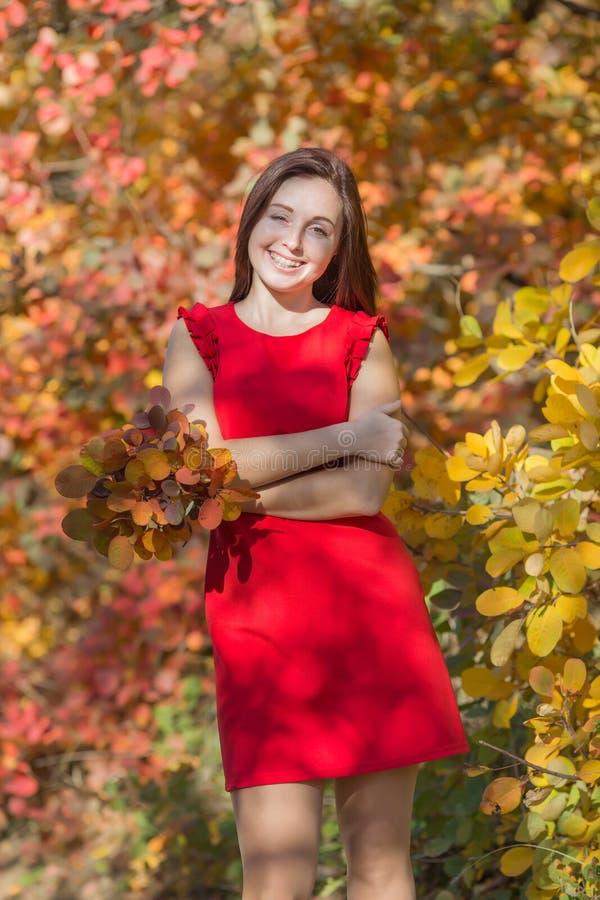Retrato da jovem mulher no vestido curto vermelho na pessoa fêmea da floresta da queda com o ramalhete das folhas do outono que l foto de stock