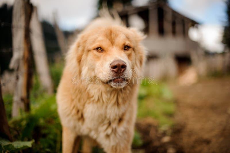 Retrato da luz calma - posição marrom do cão fora fotografia de stock