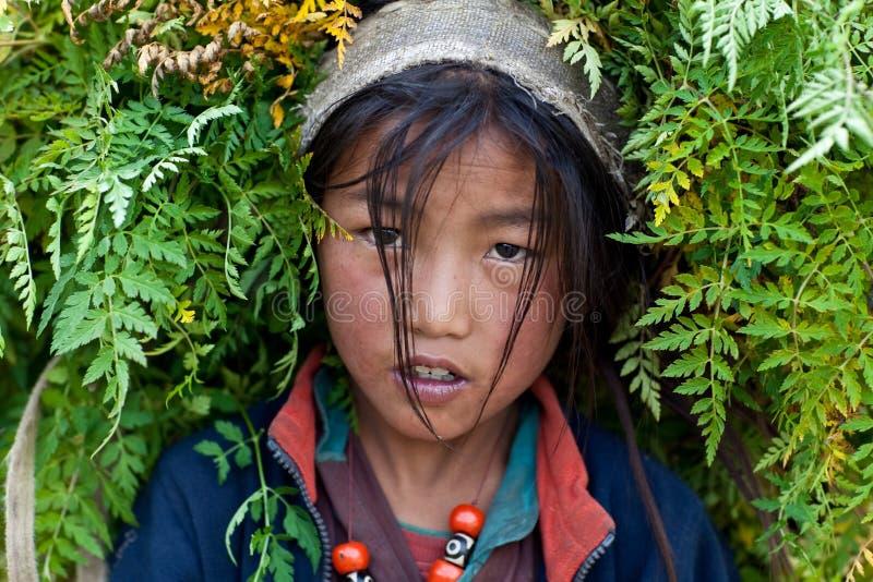 Retrato da menina tibetana imagem de stock