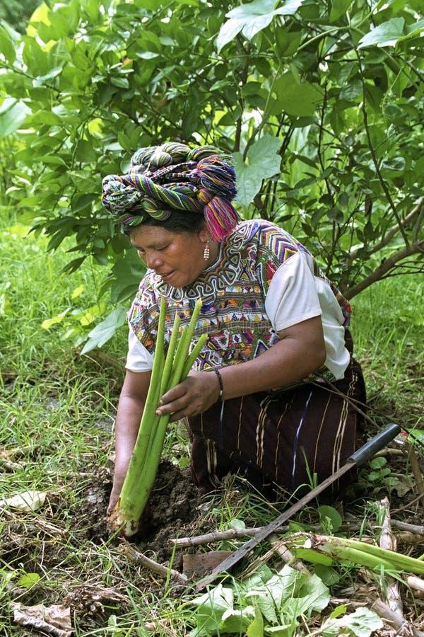 Retrato da mulher indiana guatemalteca de jardinagem fotos de stock