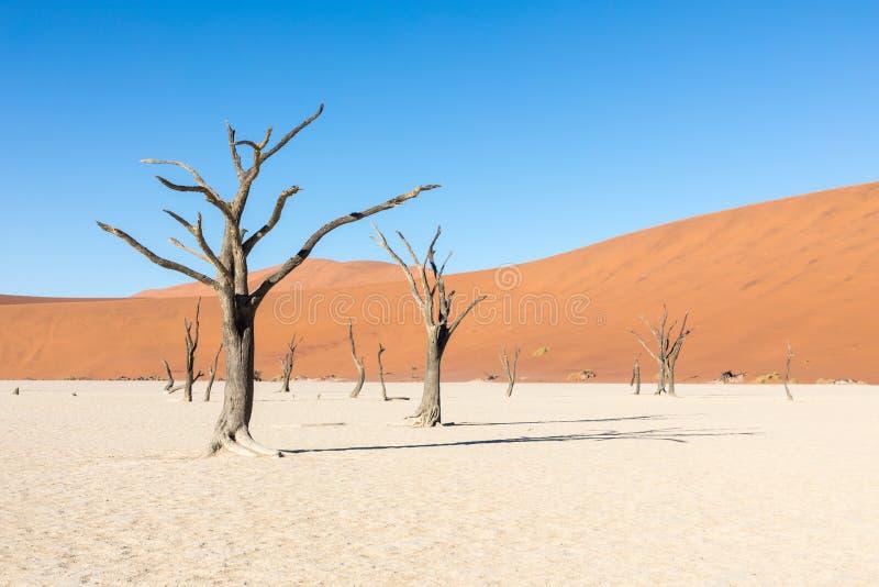 Retrato da silhueta da árvore inoperante no deadvlei, Sossusvlei, parque nacional Namíbia de Namib Naukluft foto de stock royalty free
