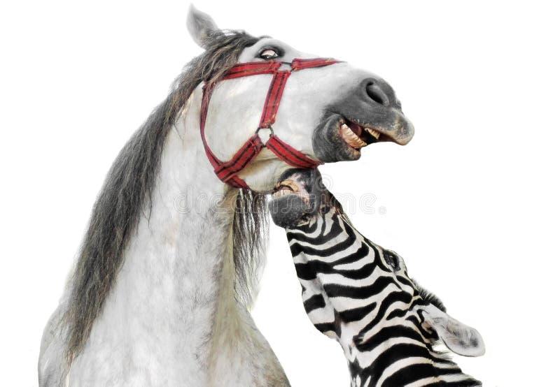 Retrato da zebra e do cavalo imagem de stock